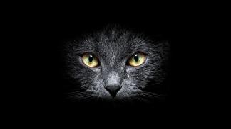 gattoNeroMuso