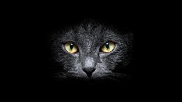 Bel Gatto Nero