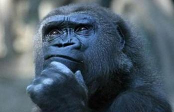 dubbio-scimmia